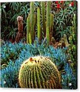 Cactus Gardens Acrylic Print
