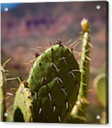 Cactus With A View Acrylic Print
