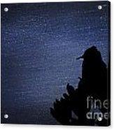 Cactus Wren In The Night Acrylic Print