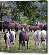 Cades Cove Horses Acrylic Print