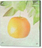 Calamondin Miniature Orange Acrylic Print by Peter Chadwick LRPS