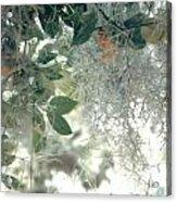 Calamondon And Moss Acrylic Print