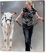 Calf Competition Acrylic Print