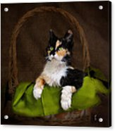 Calico Cat In Basket Acrylic Print