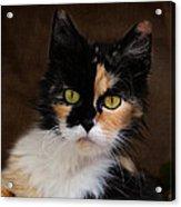 Calico Cat Portrait Acrylic Print