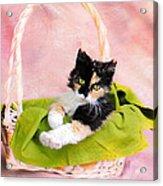 Calico Kitty In Basket Acrylic Print