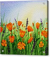 California Poppies Field Acrylic Print