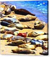 California Sunbathers . Harbor Seals Acrylic Print by Wingsdomain Art and Photography