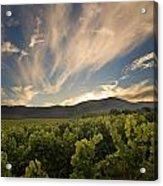 California Vineyard Sunset Acrylic Print by Matt Tilghman
