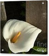 Calla Lily And Fence Acrylic Print