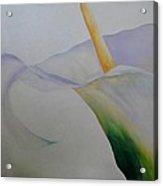 Calla Lily I Acrylic Print