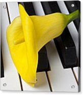 Calla Lily On Keyboard Acrylic Print