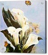 Callas And Butterflies Acrylic Print