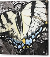 Callaway Tiger Swallowtail Butterfly Acrylic Print