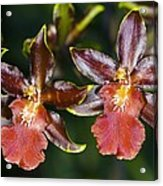 Cambria Orchid Flowers Acrylic Print by Dr Keith Wheeler