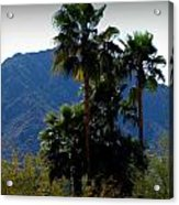 Camelback Beyond The Palms Acrylic Print