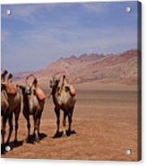 Camels On Desert With Huoyan Gobi Mountains Acrylic Print