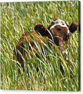 Camo Cow Acrylic Print