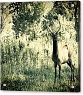 Camouflage Elk Acrylic Print