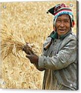 campesino cutting wheat. Republic of Bolivia. Acrylic Print