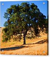 Campo Seco Tree Acrylic Print