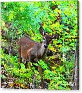 Can I Help You My Deer Acrylic Print