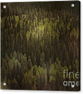 Canadian Forest - The Woods Are Lovely Dark And Deep Acrylic Print by Christine Till