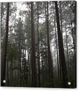 Canadian Forest Acrylic Print