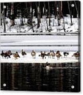 Canadian Gees At Farrington Lake Acrylic Print