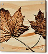Canadian Leaf Acrylic Print by Marsha Heiken