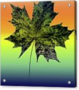 Canadian Maple Leaf Acrylic Print