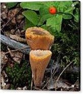 Candle Fungus Acrylic Print
