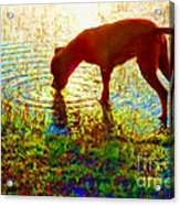 Canelo Drinking Water By The Lake Acrylic Print