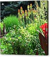 Canna Lily Garden Acrylic Print by Gretchen Wrede