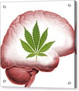 Cannabis Use, Artwork Acrylic Print by Victor De Schwanberg