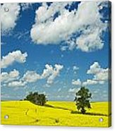 Canola Field And Clouds, Rathwell Acrylic Print