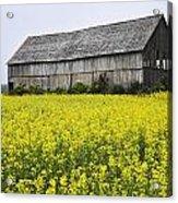 Canola Field And Old Barn Acrylic Print