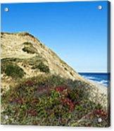 Cape Cod Dune Cliff Acrylic Print