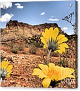 Capitol Flowers Acrylic Print