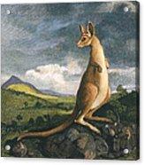 Captain Cook: Kangaroo, 1773 Acrylic Print