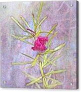 Captured Blossom Acrylic Print
