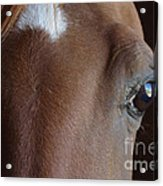 Caravaggio 02 Acrylic Print