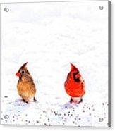 Cardinal Couple II Acrylic Print