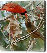 Cardinal Kisses Acrylic Print