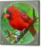 Cardinal Rings Acrylic Print