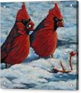 Cardinals In Winter Acrylic Print by Tracey Hunnewell