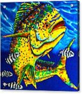 Caribbean Bull Acrylic Print
