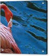 Caribbean Flamingo Acrylic Print