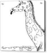 Caricature Sketch Of A Giraffe Acrylic Print