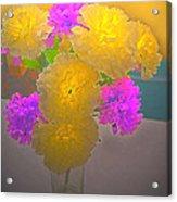 Carnation Glow Acrylic Print